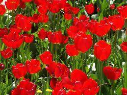 Уход за садом: облагораживание почвы и защита растений