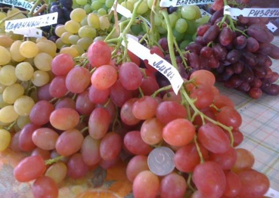 Виноград ливия. Размер ягод с 5 рублевую монету